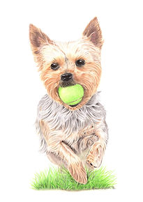 Terrier with tennis Ball