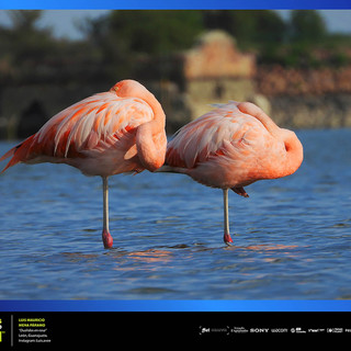 Template Fotos Expo Postales de León Lu