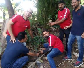 200 tree 🌲🌲 🌲 plantation with Qura Corporate Co at Aery colony goregavn E,mumbai on 11th Jan 2020