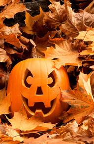 Pumpkin - not so scary