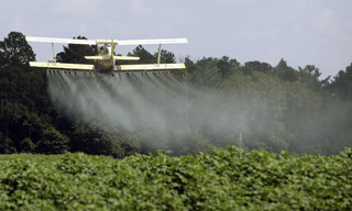What the pesticides in our urine tell us about organic food