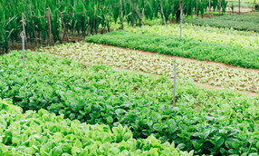 Agroecology as Innovation
