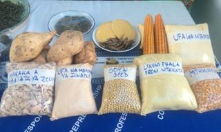 Did Monsanto Write Malawi's Seed Policy?