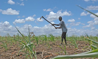 Seeds of Climate Resilience in Mozambique