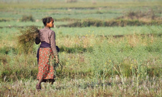WTO and Food Security: Biting the Hand that Feeds the Poor