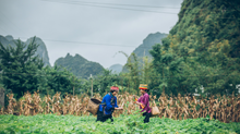 Realizing Our Power: Farming and Eating for a Small Planet