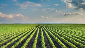 Rome Summit Takes Bold Step Toward Agroecology