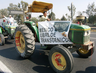 Monocultures of the Genetically Modified Mind: My Surreal Encounter with Monsanto in Mexico