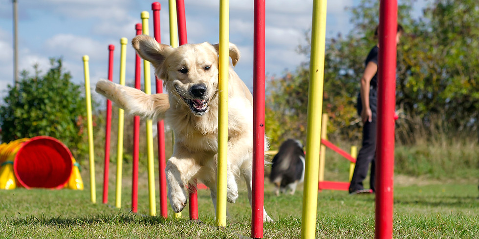 Agility with Andy Smith