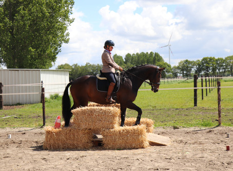 1st Working Equitation competition