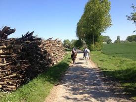 paarden hout.jpg
