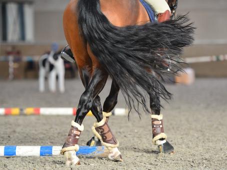 Jury Cursus met dank aan Paardensport Vlaanderen voor de steun