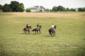 3 paarden weide.jpg