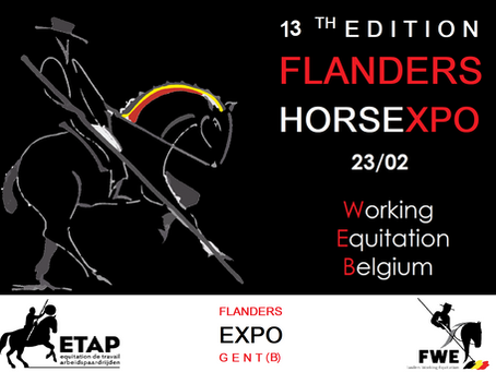 WORKING EQUITATION @ FLANDERS HORSE EXPO