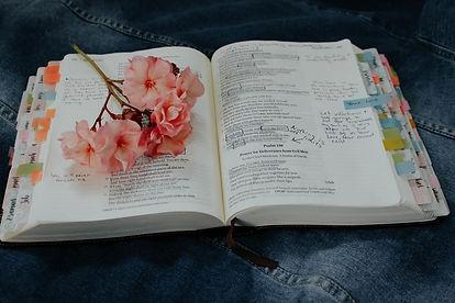 bible 7.jpg