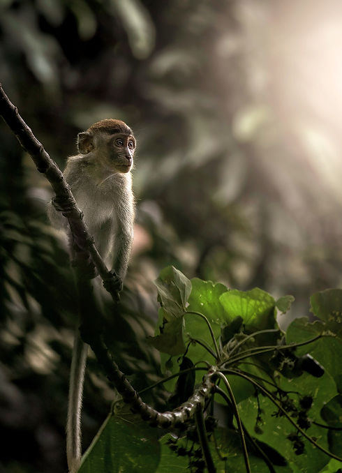 monkey in indonesian rainforest - give back to nature