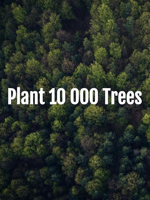 Plant 10 000 Trees