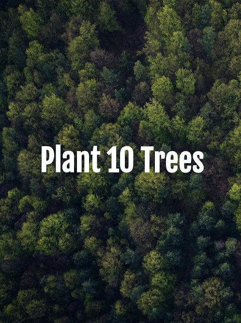 Plant 10 Trees