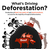 WHAT'S DRIVING DEFORESTATION?
