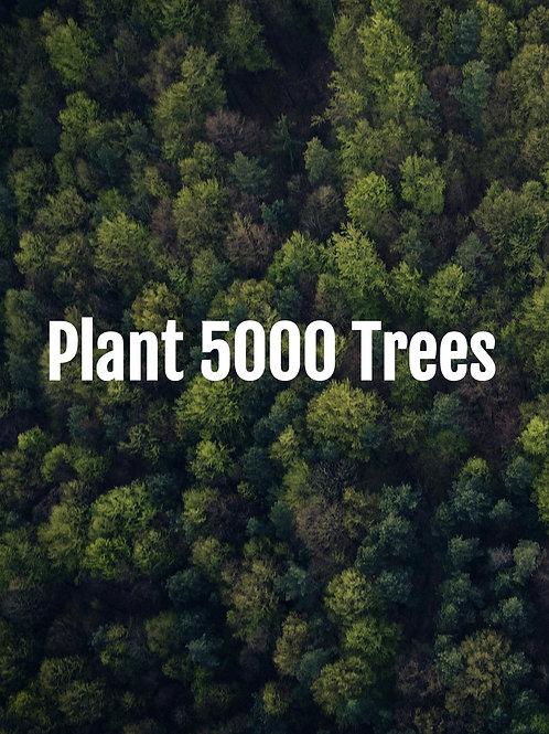 Plant 5000 Trees