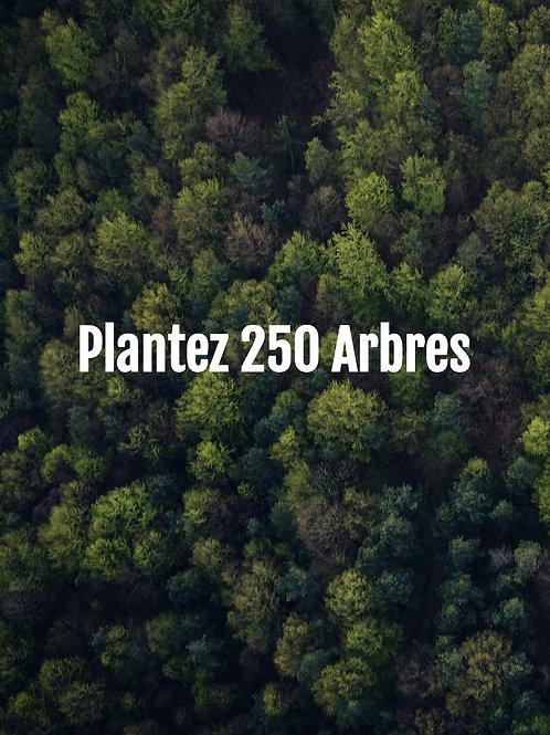 Plantez 250 Arbres