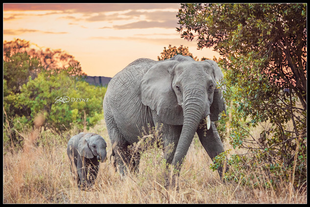 ElephantSunrise.jpg