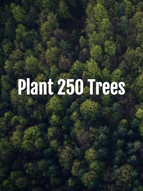 Plant 250 Trees