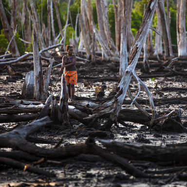 WHO IS RESPONSIBLE FOR THE DEFORESTATION?