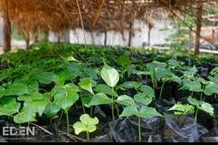 Madagascar_2012_Seedlings in nursery 1.j