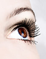Wimpernstudio Coloration