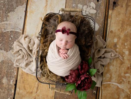 | Geelong Newborn Photography - Aurora Rose |