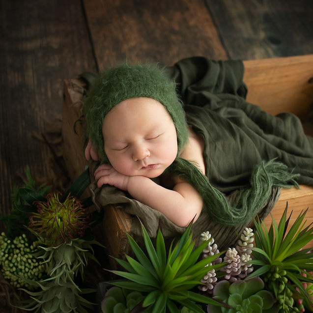 Newbonr baby posed in wooden crate with natural succulents