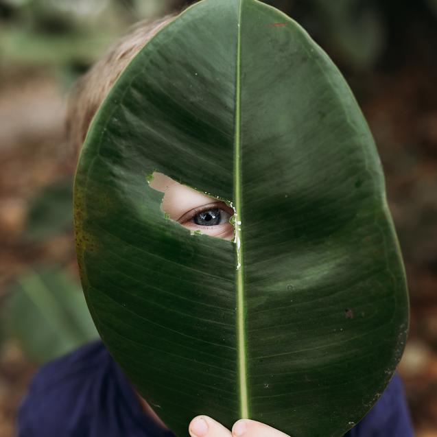 Boy looking through hole in leaf