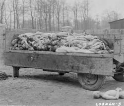 Corpos no campo de Buchenwald