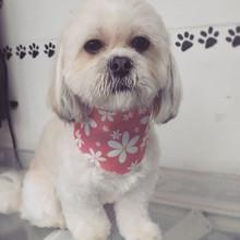 Teddy! #lhasapoo #fullgroom #doggrooming