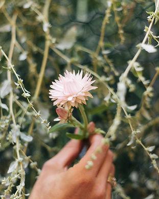 Flowers-139.jpg