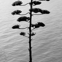 agave-sm.jpg
