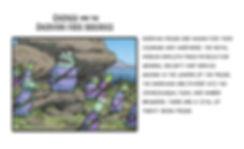 SxervianFrogsWixProfile copy.jpg