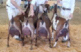 newga best herd in show.jpg