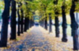 website trees vivid.jpg