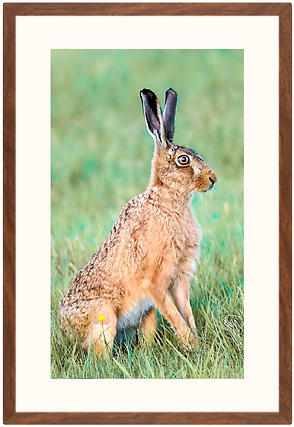 hare print.png