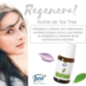 AE Tea Tree 1.jpg