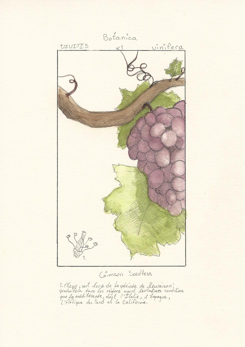 Pierre-Luc Gingras - Botanica 1 (Techniques mixtes)