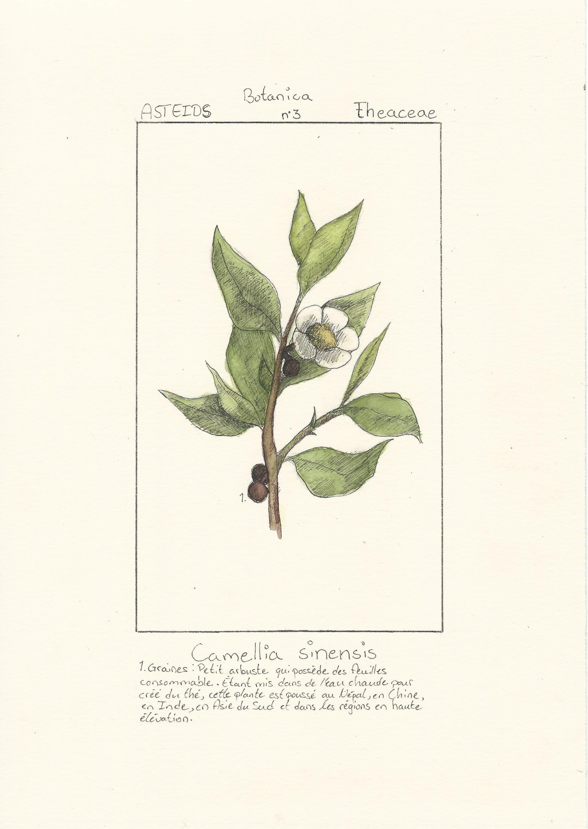 Pierre-Luc Gingras - Botanica 3 (Techniques mixtes)