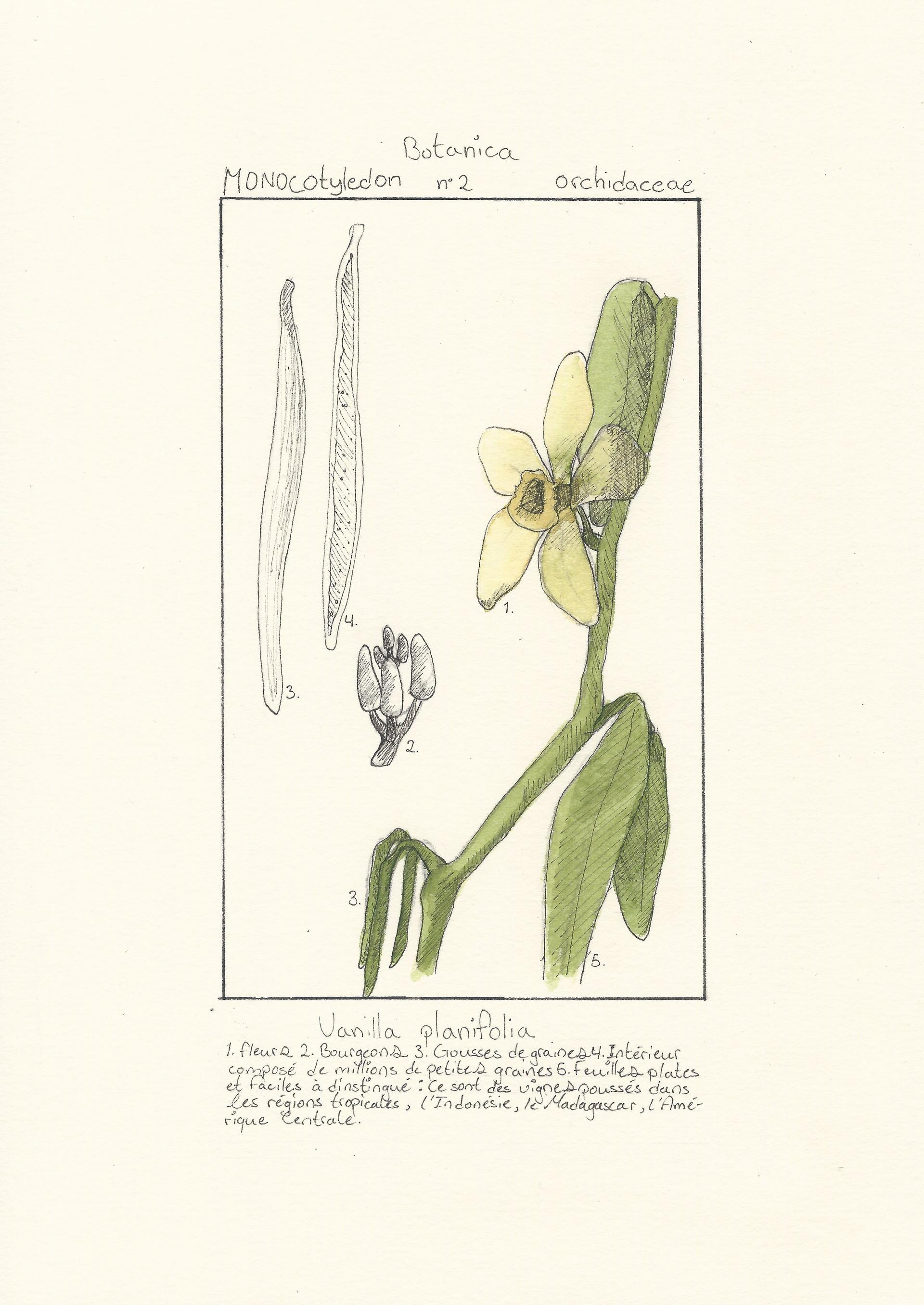 Pierre-Luc Gingras - Botanica 2 (Techniques mixtes)