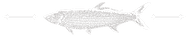 Fisheries Logo Tarpon Fish