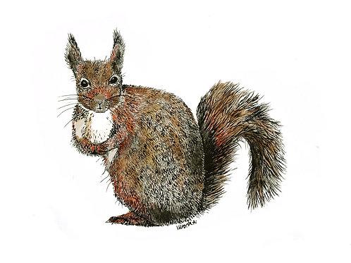 Standard Squirrel - Canvas print