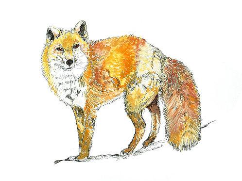 Fluffy Fox - Canvas print