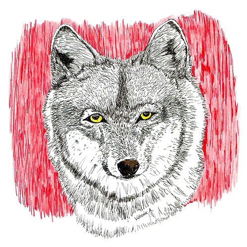 Red Wolf - Canvas print