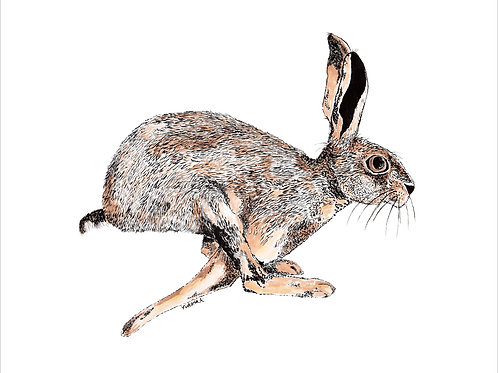 Running Hare - Canvas print